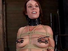 Gagged cutie with clamped..